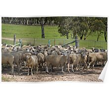 The Ewes Poster