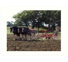 Four Clydesdales harrowing the field - Churchill Island, Easter 2010 Art Print