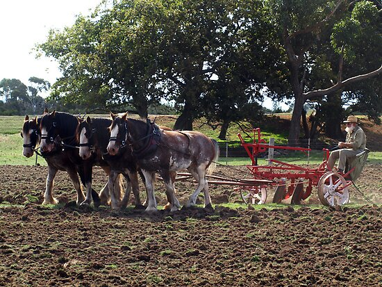 Four Clydesdales harrowing the field - Churchill Island, Easter 2010 by Bev Pascoe