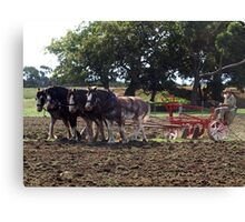 Four Clydesdales harrowing the field - Churchill Island, Easter 2010 Canvas Print