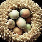 Nest by Mandy Wiltse