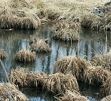 Mounds of Grasses by Lynn  Gibbons