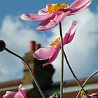 Windflowers by Barnbk02