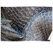 Gator Belly Hand Thigh Poster