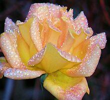 Raindrops on Roses by Barnbk02