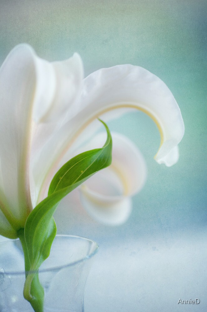 White Lily in Vase by AnnieD