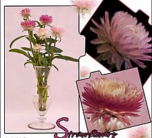 Photo Collage Of Strawflowers by Sandra Foster