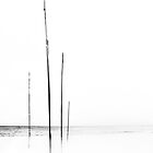 Flagpoles by LauraMcLean