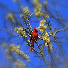 Easter... Red Cardinale.. by Larry Llewellyn