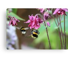 Busy Little Bees Canvas Print