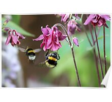 Busy Little Bees Poster