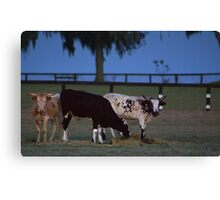 Cows Evening Glory Canvas Print