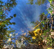 Everglades Reflections by njordphoto