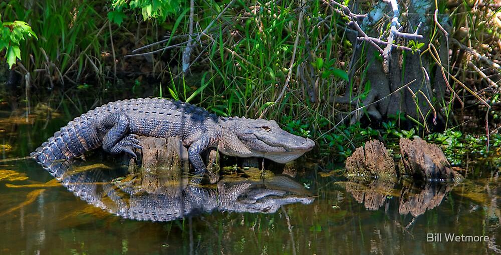 Happy Gator by Bill Wetmore