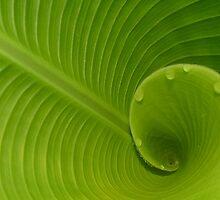 Spicy Green by Jodyb