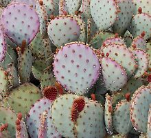 A Softer Side of Prickly Pear by MMPhotography