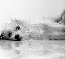 Dog Tired by LauraMcLean