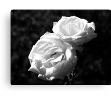 An English Rose Canvas Print