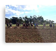 Working Horse Parade, Churchill Island, Easter 2010 Metal Print