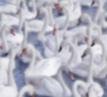 Softly Softly Swan Lake by Ra12