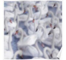 Softly Softly Swan Lake Poster