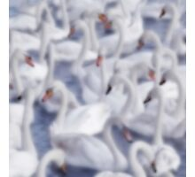 Softly Softly Swan Lake Photographic Print