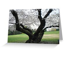 Capital with cherry tree Greeting Card