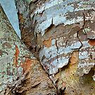 Bark Composition 8  by Lynda Lehmann