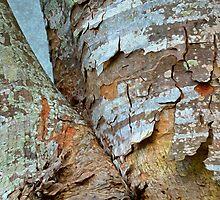 Bark Composition 8  by Lynda Lehmann