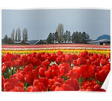 Across the field of Tulips     Poster