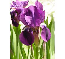 The before image of Green Earth Iris Photographic Print