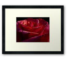 Water Color Rose Framed Print