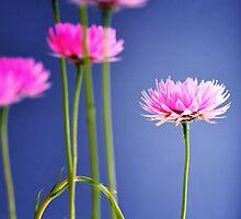 reformed daisy by nadine henley