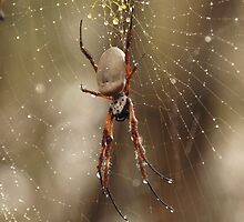 Golden Orb Weaver by Sarah Howarth [ Photography ]