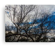 the sky behind the trees Canvas Print