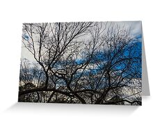 the sky behind the trees Greeting Card