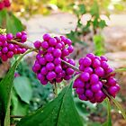 Berries On The Vine by Todd A. Blanchard