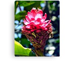 Pink Ginger Tropical Flower Plant Canvas Print