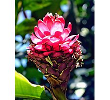 Pink Ginger Tropical Flower Plant Photographic Print