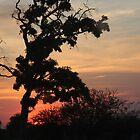 Sunset Botswana by richeriley