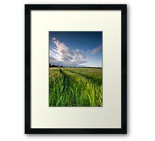The Wind That Shakes the Barley  II Framed Print