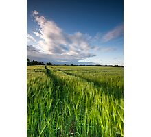 The Wind That Shakes the Barley  II Photographic Print