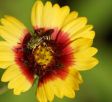Bee on Red n Yellow flower Sticker