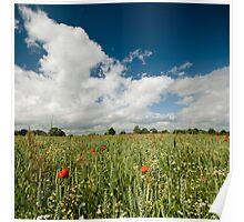 Poppy Fields - Herefordshire UK Poster