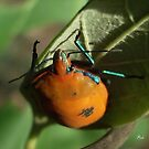 The beetle by Edyta Magdalena Pelc