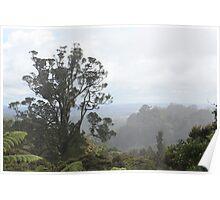 Waitakere Ranges, New Zealand Poster