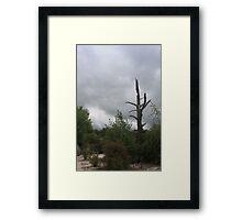 Starkness Framed Print