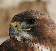 Eagle eye by Nicholas Averre