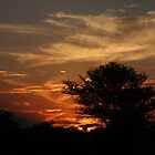 Bushveld Sunset by richeriley