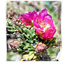 Fuscia Pink Cactus Flower Bloom Poster